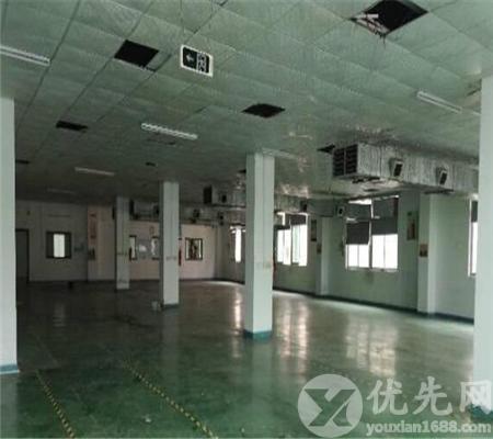 觀瀾新出超大空地獨院廠房5000平方米帶裝修出租